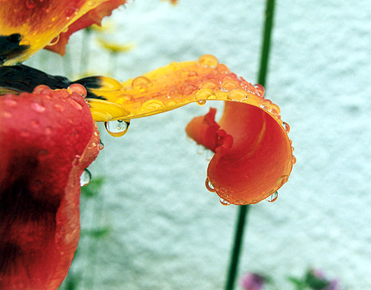"photo ""Rain"" tags: macro and close-up, abstract,"