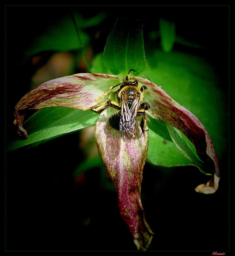 """фото """"A Fine Wine"""" метки: природа, макро и крупный план, насекомое"""