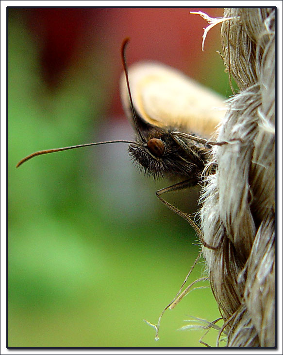 "photo ""Butterfly in portrait."" tags: nature, macro and close-up, insect"