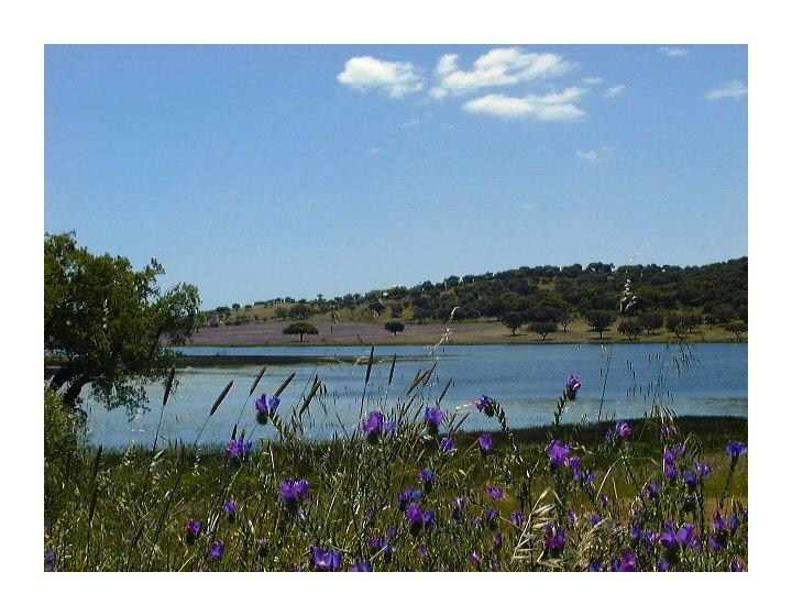 "фото ""Alentejo Landscape - Portugal"" метки: пейзаж, весна"