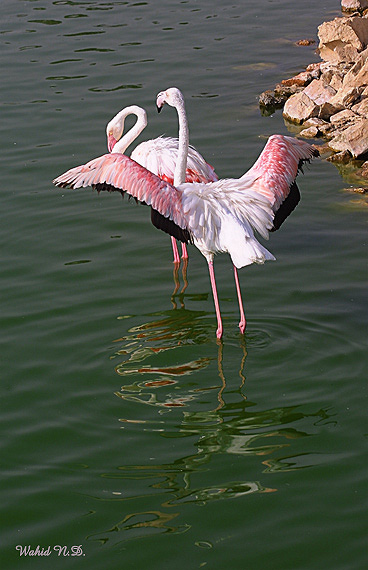 """photo """"A Couple"""" tags: nature, wild animals"""