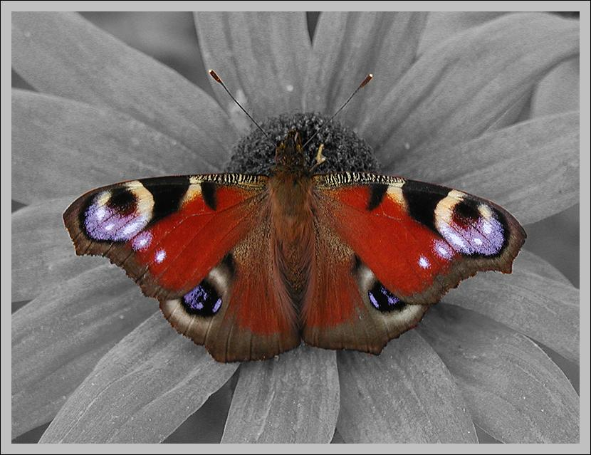 "photo ""Bbutterfly"" tags: nature, insect"