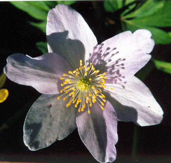 "фото ""My kingdom for a flower"" метки: макро и крупный план,"