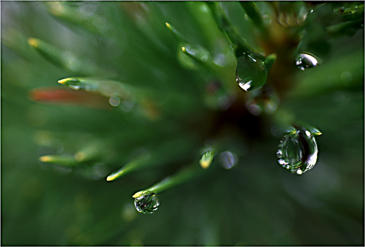 "photo ""Raindrops"" tags: nature,"