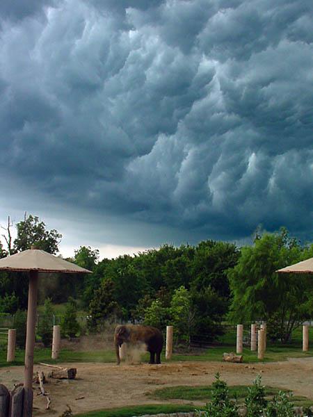 "фото ""Summer Storm"" метки: природа,"