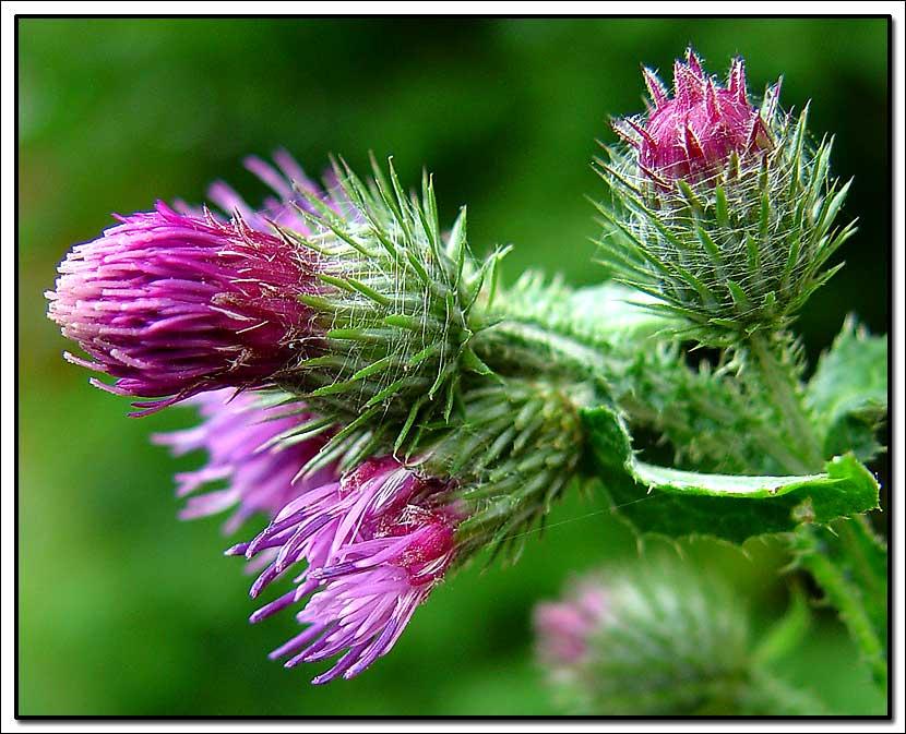 """фото """"Wild"""" метки: природа, макро и крупный план, цветы"""