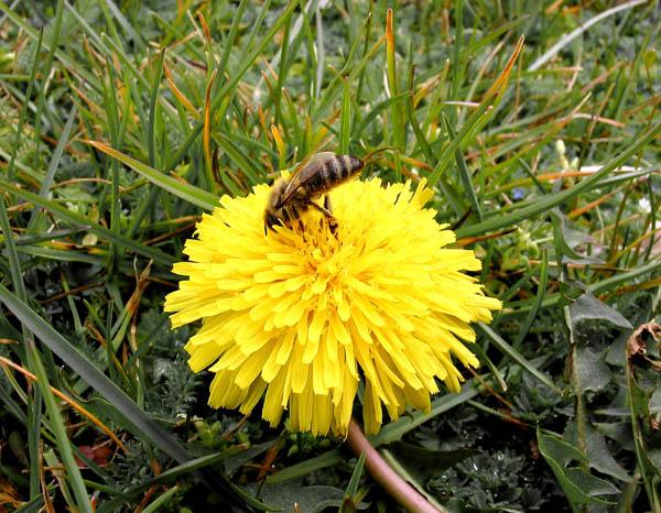 """фото """"Будет майский мёд..."""" метки: фотомонтаж, макро и крупный план,"""