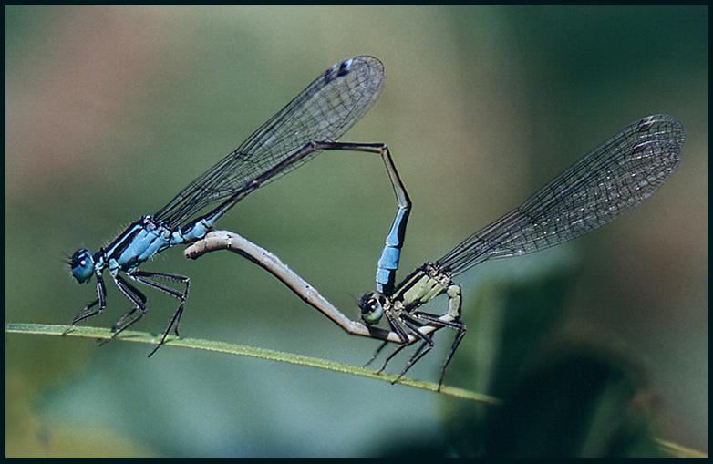 """фото """"Будет жизнь !"""" метки: природа, насекомое"""
