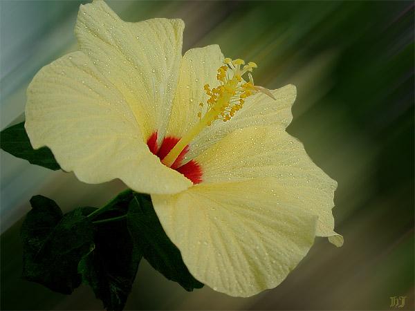 """фото """"""""Есть только миг...."""""""" метки: макро и крупный план, природа, цветы"""