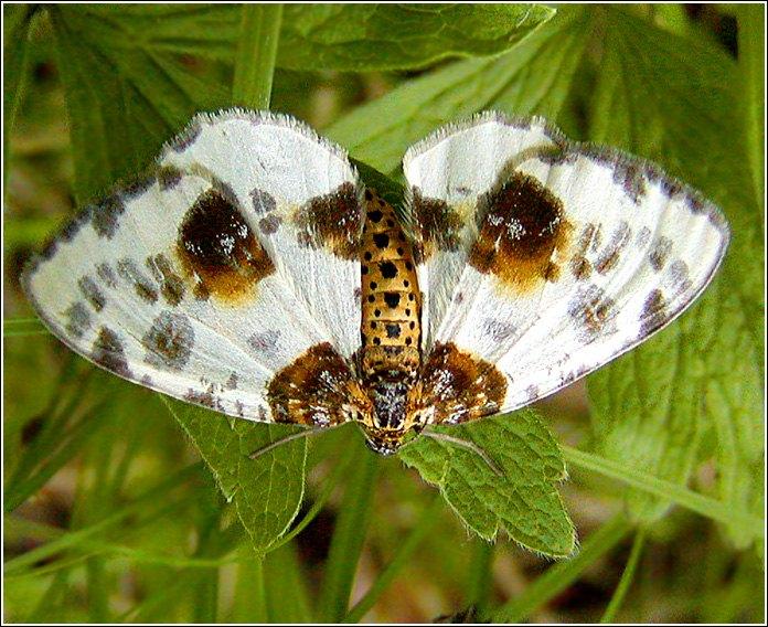 """фото """"Улыбка"""" метки: природа, макро и крупный план, насекомое"""
