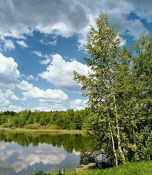 """фото """"Подмосковный пейзаж"""" метки: пейзаж, лес, лето"""