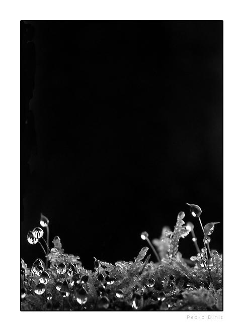 """фото """"dew drops"""" метки: макро и крупный план, черно-белые,"""