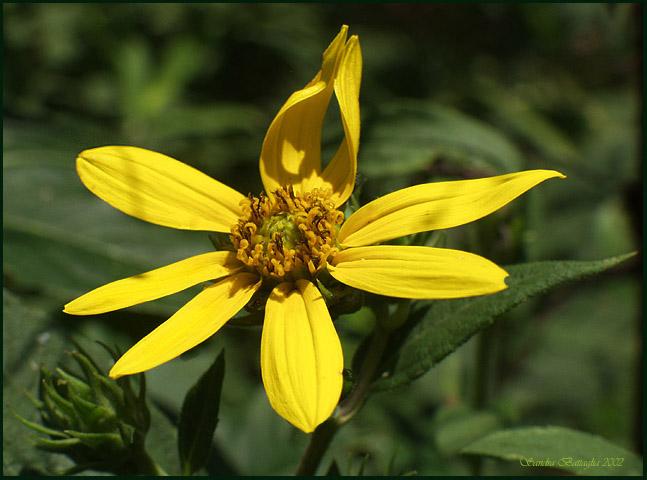 """фото """"Silent Applause"""" метки: макро и крупный план, природа, цветы"""