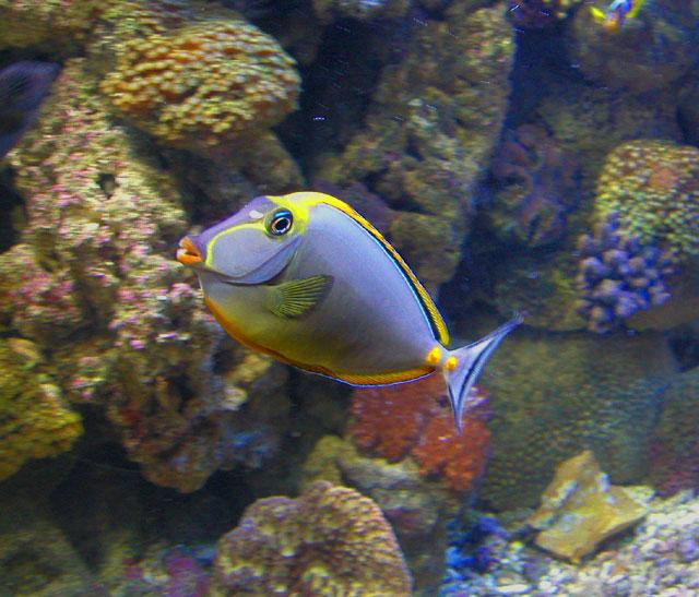 """фото """"Рыбка"""" метки: природа,"""
