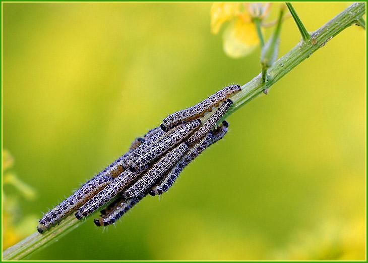 """фото """"Какая прелесть!"""" метки: природа, макро и крупный план, насекомое"""