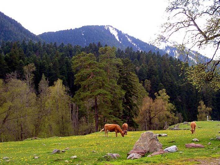 """фото """"Утопия"""" метки: пейзаж, горы, лес"""