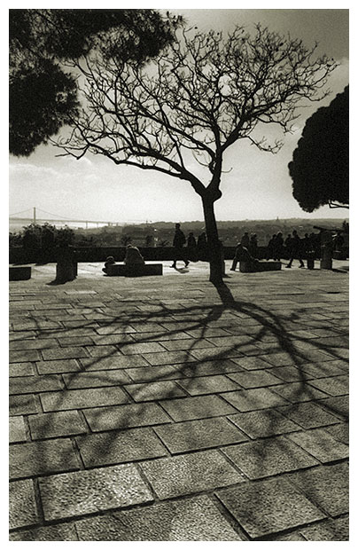 "фото ""Roots on the Ground"" метки: архитектура, пейзаж,"