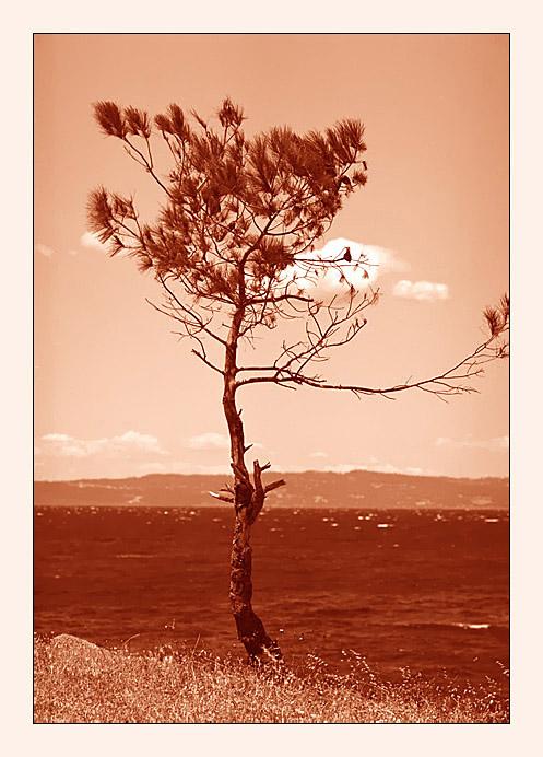 """фото """"Одиночество..."""" метки: пейзаж, вода"""