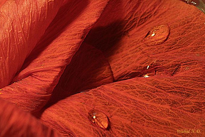 """фото """"Floral abstract"""" метки: макро и крупный план,"""