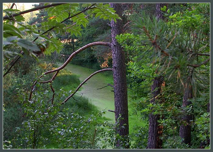 "фото ""Сонная река (серия ""Лес"")"" метки: пейзаж, вода, лес"