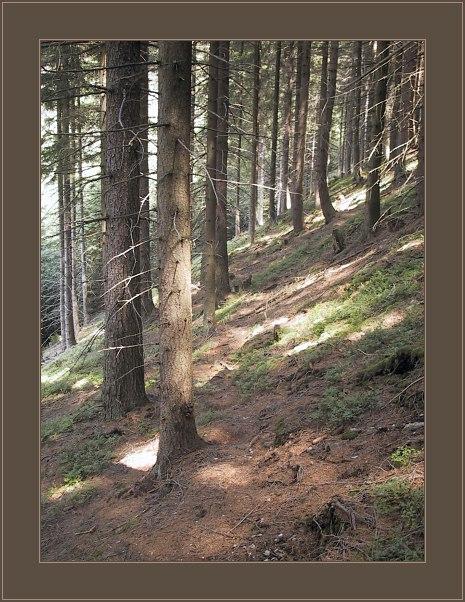 """фото """"*****"""" метки: пейзаж, лес"""