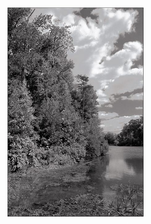 """фото """"Other shades of summer...."""" метки: пейзаж, лето"""