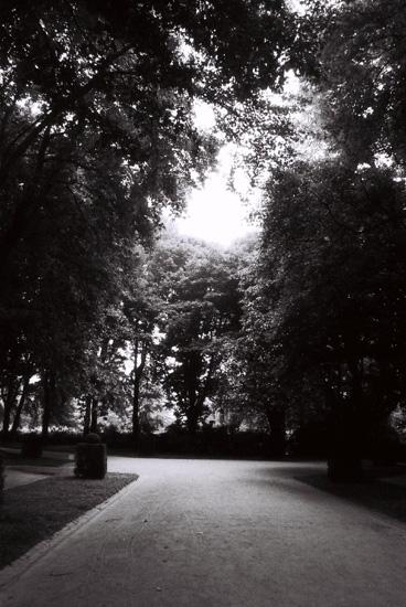 """фото """"Wondering..."""" метки: пейзаж, лес"""