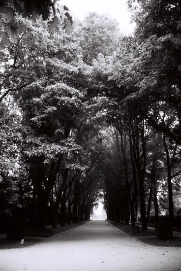 """фото """"Trees..."""" метки: пейзаж, лес"""