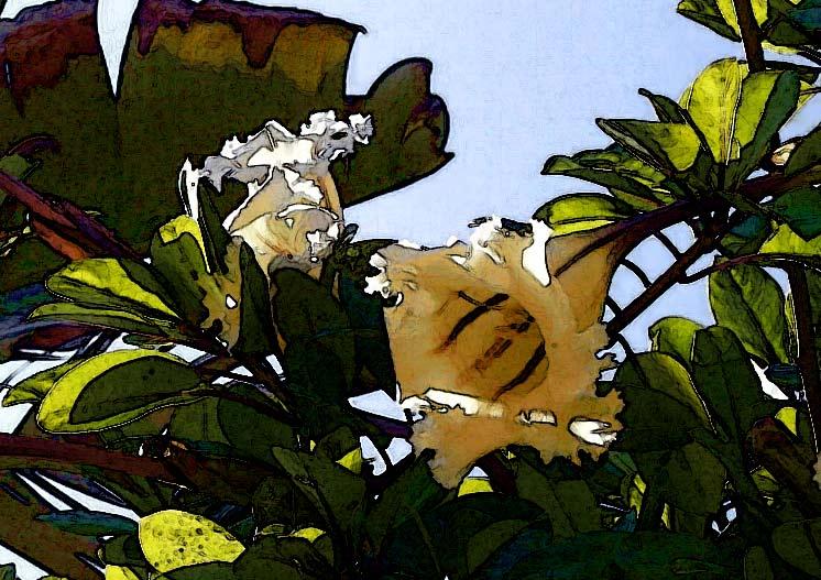 """фото """"бомонтия #3"""" метки: абстракция, природа, цветы"""