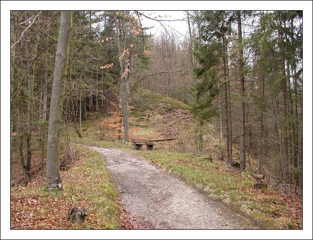 """фото """"Spring"""" метки: пейзаж, весна, лес"""