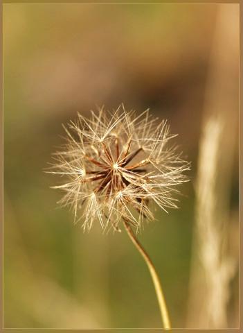 "фото ""вожидании ветра"" метки: природа, цветы"