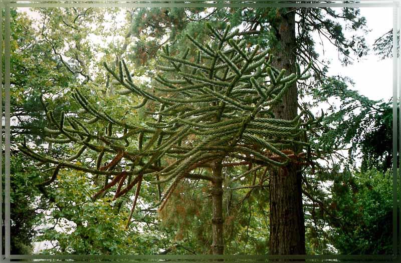 """фото """"Странное дерево"""" метки: природа, архитектура, пейзаж,"""