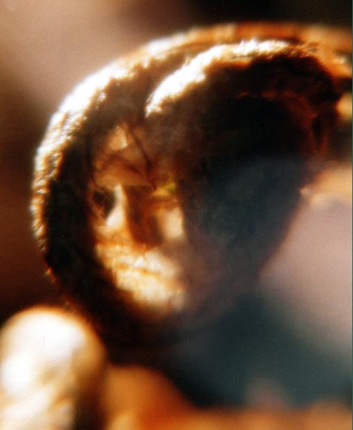 """фото """"Портрет..."""" метки: абстракция, макро и крупный план,"""