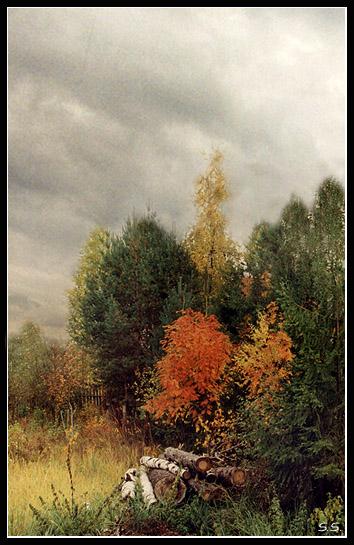 """фото """"Поленья..."""" метки: пейзаж, осень"""
