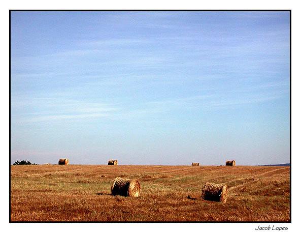 "фото ""golden field, blue sky"" метки: пейзаж, лето"