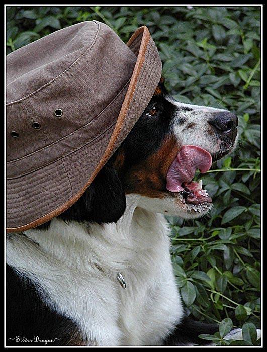 """фото """"Chop Lickin` Good!"""" метки: природа, юмор, домашние животные"""