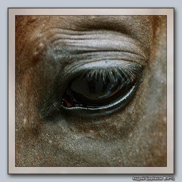 """фото """"Отражения VII: Что там, в зеркале души?"""" метки: природа, домашние животные"""