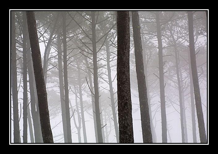 """фото """"foggy morning"""" метки: пейзаж, лес"""