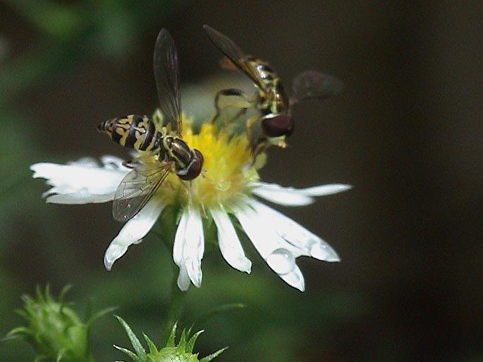 """фото """"Соседи по комнате"""" метки: макро и крупный план, природа, насекомое"""