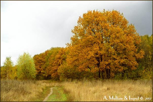 """фото """"Цвет осени 2"""" метки: пейзаж, лес, осень"""
