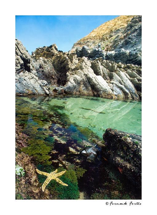 "фото ""Sea Stars (IV)"" метки: пейзаж, природа, вода"