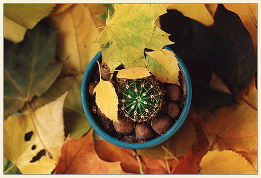 """фото """"Осень: время гнать текилу :)"""" метки: природа, натюрморт, цветы"""