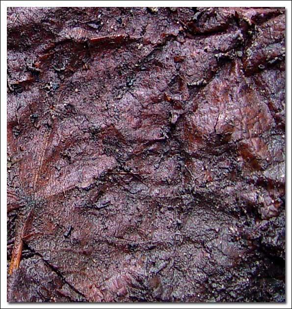 "фото ""Leather II"" метки: абстракция, макро и крупный план,"