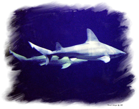 """фото """"Sharks"""" метки: природа, путешествия, Северная Америка, дикие животные"""