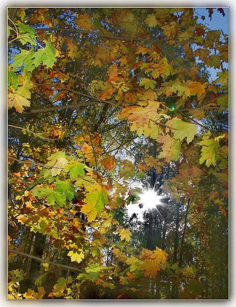"""фото """"Осенний этюд-2"""" метки: пейзаж, осень"""