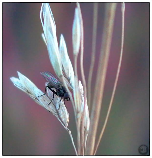 """фото """"Anticipating the Next Move"""" метки: макро и крупный план, природа, насекомое"""
