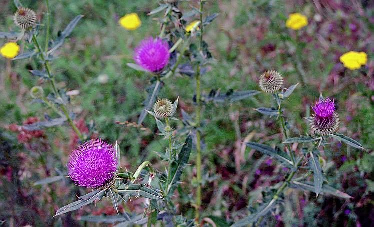 """фото """"Геометрия флоры (1)"""" метки: природа, цветы"""