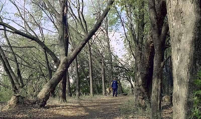 """фото """"Гуляющий с собакой"""" метки: природа, домашние животные, цветы"""