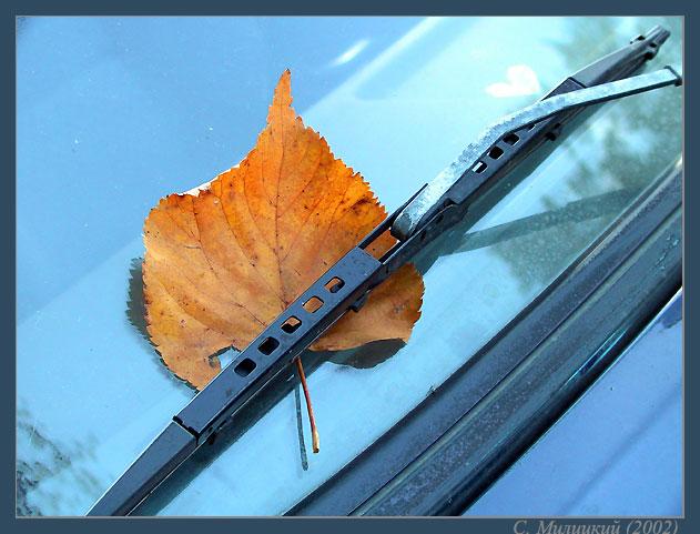 """фото """"Осеннее предупреждение"""" метки: натюрморт, пейзаж, осень"""