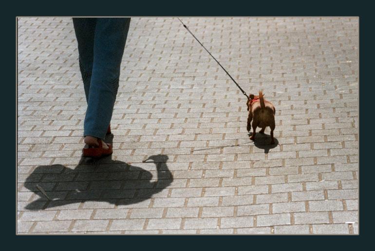 "фото ""Дама с собачкой."" метки: жанр, репортаж,"